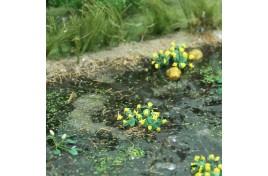Marsh Marigolds 16 pack
