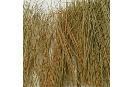 Natural Brown Field Grass