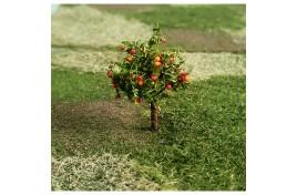 Apple Trees x 4