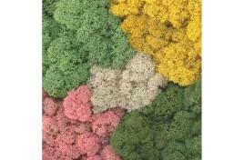 Assorted Colour Lichen 125g