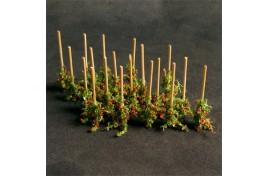 Tomato Plants (18) - 00912